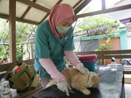 275 HPR Kelurahan Serdang Berhasil Disuntik Vaksin Rabies