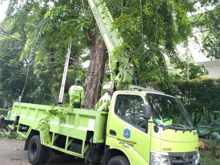 26,106 Trees in South Jakarta Have Been Pruned During January-December