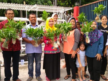 Pasar Baru Dasa Wisma Urban Farming Community Harvests 4,7 Kg of Kale