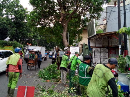 882 Trees in Central Jakarta Pruned Along June