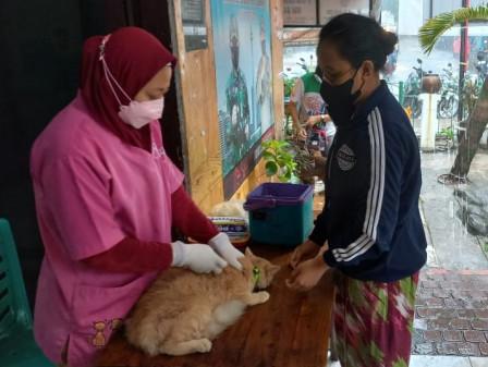 80 Ekor HPR di Cideng Divaksin Rabies