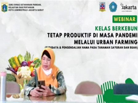 155 Peserta Ikuti Webinar Berkebun Dengan Sudin KPKP Jakarta Barat