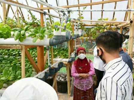 Dinas KPKP Monitor dan Evaluasi Lokasi Pertanian Perkotaan