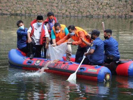 Sudin KPKP Jaksel Tebar 10 Ribu Benih Ikan Nila di Waduk Prapanca