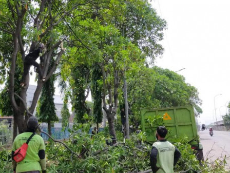 430 Trees in North Jakarta Pruned During October 1-26