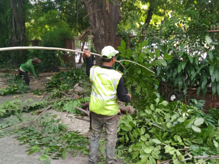 Throughout October, 2,462 Trees in South Jakarta Pruned