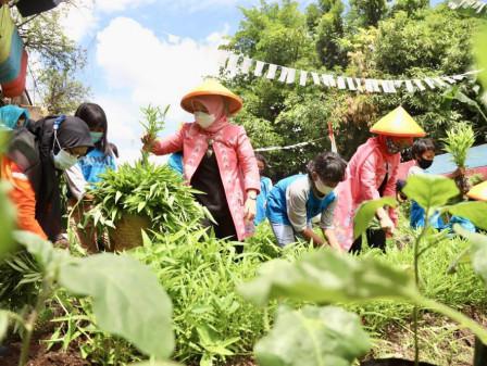 Warga Warakas Berdayakan Pertanian di Lahan Kolong Tol