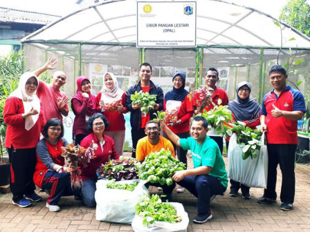 KPKP Harvests Vegetables and Fruits from OPAL Land