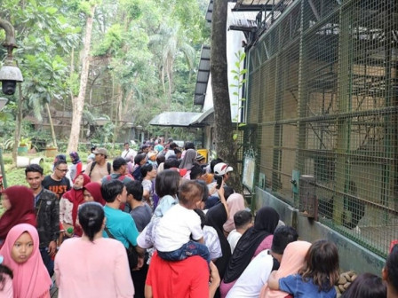 347,137 People Visit Ragunan Zoo Along Eid Holiday