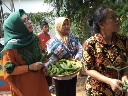 5 Kilograms of Bitter Melon Harvested from Jaya Molek RPTRA Urban Farm
