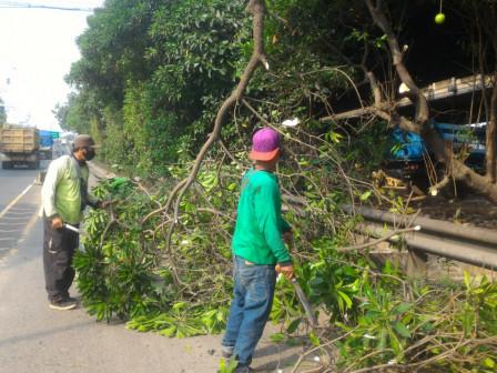 Januari-Agustus 6.334 Pohon Ditoping di Jakbar