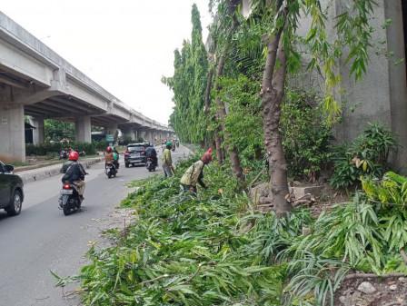 31 Pohon di Jl DI Panjaitan Dipangkas