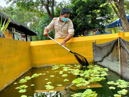 RPTRA Bhineka Harvests 10 Kilograms Catfish
