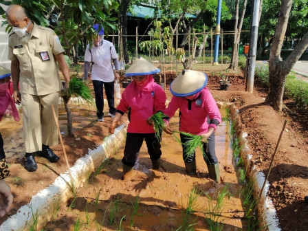 North Jakarta Walkot Farm Develops Minapadi Agricultural System