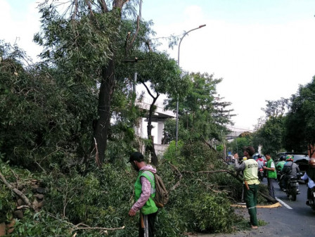Lima Pohon di Jl Mabes Hankam Ditoping