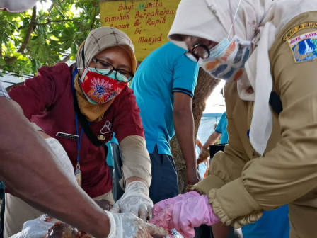 Sudin KPKP Kepulauan Seribu Temukan 2 Kilogram Hati dan Paru Hewan Kurban Mengandung Cacing