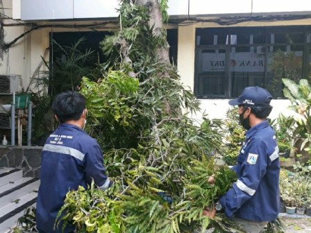Trees Prone to Fall in Thousand Islands Regency Plaza Pruned