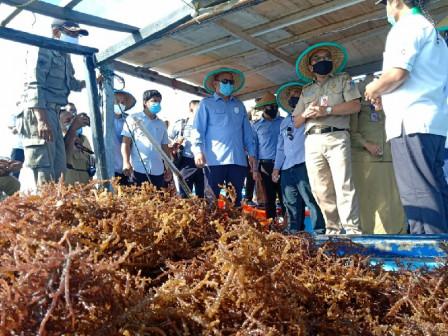 Thousand Islands Seaweed Farmers Get Staple Food Package Aid