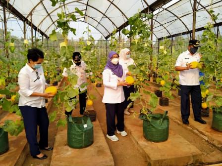 Penjabat Sekda Pimpin Panen Melon di Agro Wisata Cilangkap