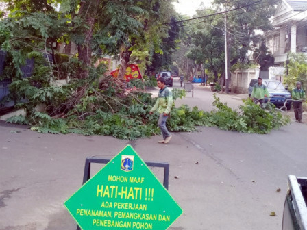 2,342 Trees in South Jakarta Pruned and Cut Down