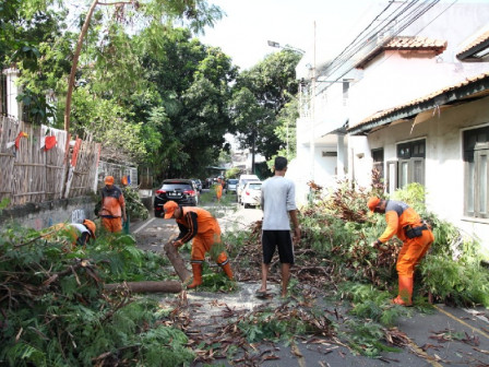 January-September, Central Jakarta Park and Urban Forest Prunes 5,552 Trees