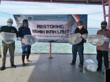 PBKL Conducts Restocking of 1,700 White Snapper Seeds in Tidung Island Waters