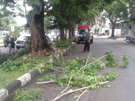 22 Trees Along Jalan Baru Pruned
