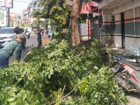10 Pohon di Jl Pahlawan Revolusi Pondok Bambu Dipangkas