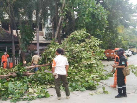 Rainy Season, Five Trees on Jalan Taman Ratu Pruned