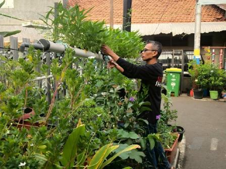 Central Jakarta has 150 Urban Farming Spots
