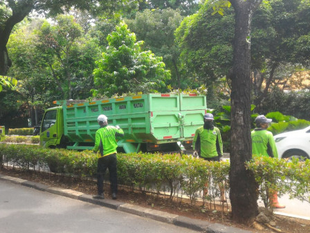Tiga Pohon Ditoping di Jalan Patimura