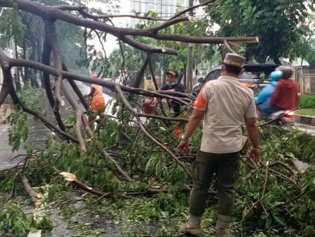 23 Pohon Tumbang di Jakbar Rampung Dievakuasi