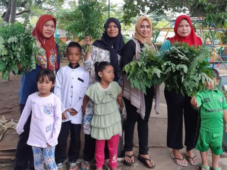 Tidung Ceria RPTRA Harvests 3.5 Kg of Moringa Leaves