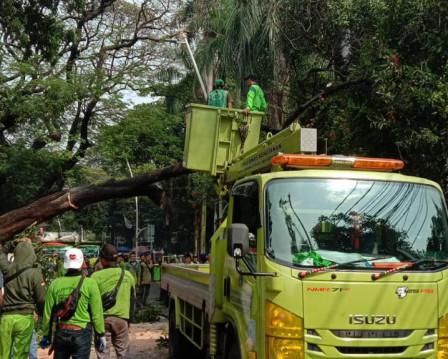 2.358 Pohon di Jakarta Utara Dipangkas