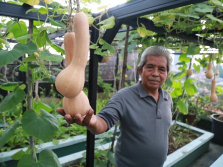 Pensiunan ASN Pemprov DKI, Sukses Kembangkan Urban Farming