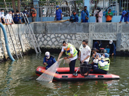 35 Kg Ikan Nila Berhasil di Panen di Embung Pangeran Jayakarta