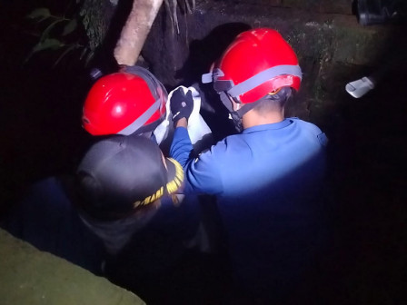 Ular Sanca Sepanjang 3 Meter Diamankan Gulkatmat Jaktim