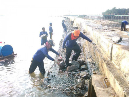 Petugas Lakukan Pemasangan Bronjong Tanggul Pantai Utara Pulau Untung Jawa