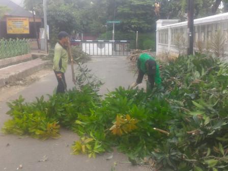 50 Trees in Wijayakusuma Park Pruned