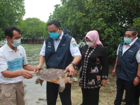 100 Hatchlings and 2 Hawksbill Turtles Released in waters of Sebira Island