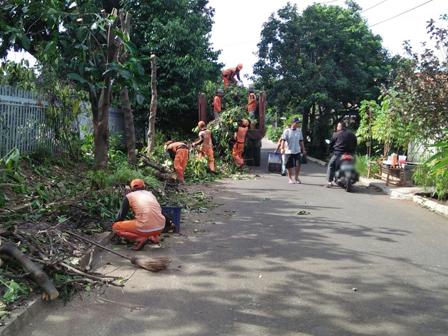 PPSU Prunes 7 Trees on Jl. Bintaro Permai