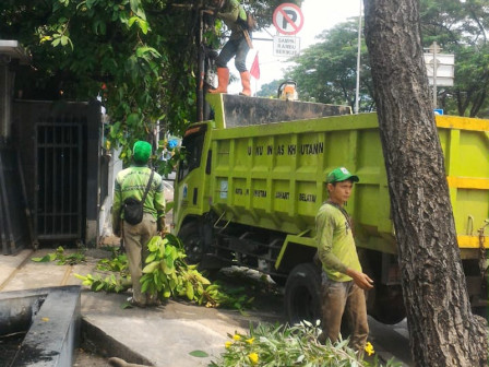 January-August, 15,796 Trees in South Jakarta Pruned