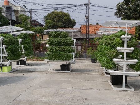 North Jakarta KPKP will Develop 40 Urban Farming Locations