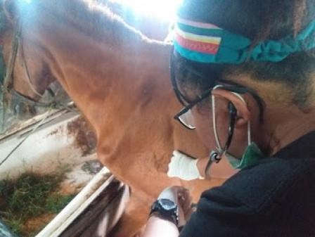 Sudin KPKP Jaksel Berikan Perawatan Kesehatan Pada 39 Kuda