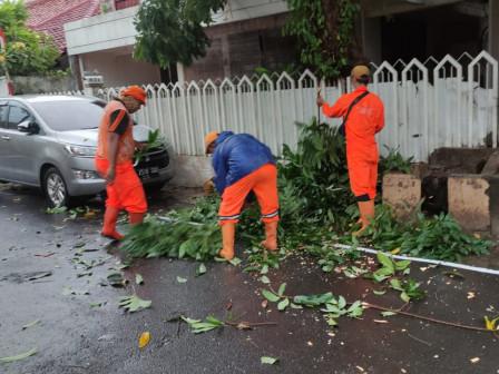 10 PPSU Evakuasi Dua Pohon Sempal di Kayu Putih