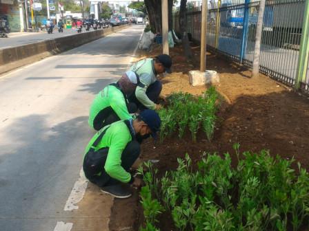 Enam Petugas Percantik Jalur Hijau di Jalan Daan Mongot
