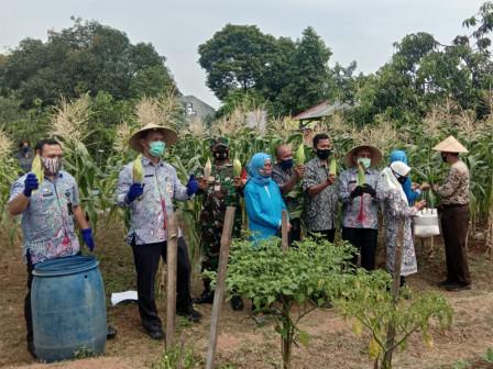 Urban Farming in North Jakarta Continues to Thrive Amid Coronavirus