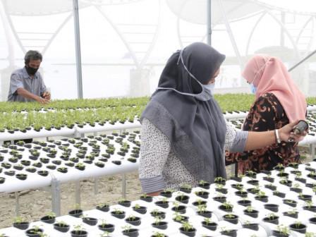 Warga RW 04 Kelurahan Pulau Kelapa Kembangkan Pertanian Perkotaan Sistem Hidroponik