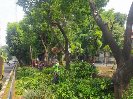 100 Pohon di Jl Persahabatan Timur Ditoping