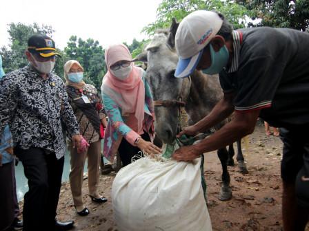 Sudin KPKP Jakbar Lakukan Pemeriksaan dan Berikan Pakan Kuda